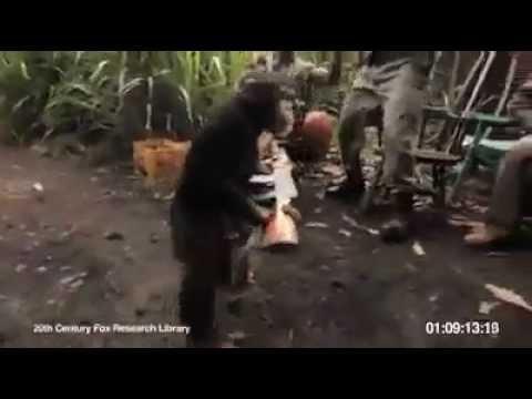 لن تصدق ماذا فعل هذا القرد بمجموعة من المسلحيين!