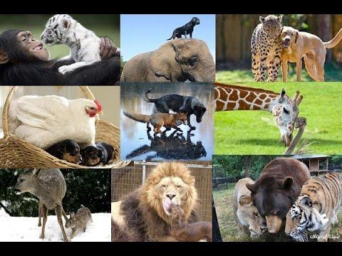 أغرب 15 صداقة غريبة بين الحيوانات