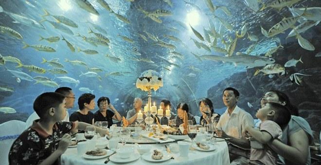 بالفيديو .. الآن تناول وجبتك المفضلة وسط المخلوقات البحرية!