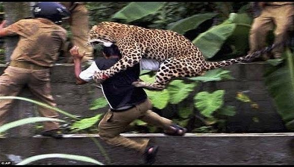 فيديو: نمر يهاجم سكان قرية هندية