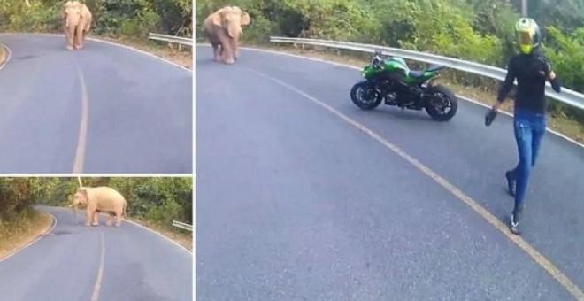 بالفيديو.. هروب راكبة دراجة نارية من فيل قَطَع طريقها