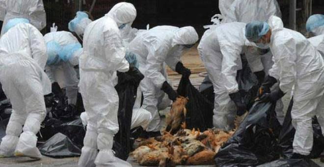 مهنيون: فيروس انفلونزا الطيور دخل إلى المغرب من الجزائر