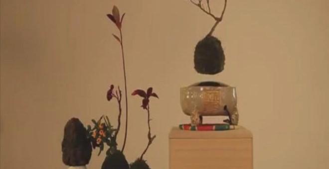 بالفيديو.. أشجار بدون جذور معلقة في الهواء