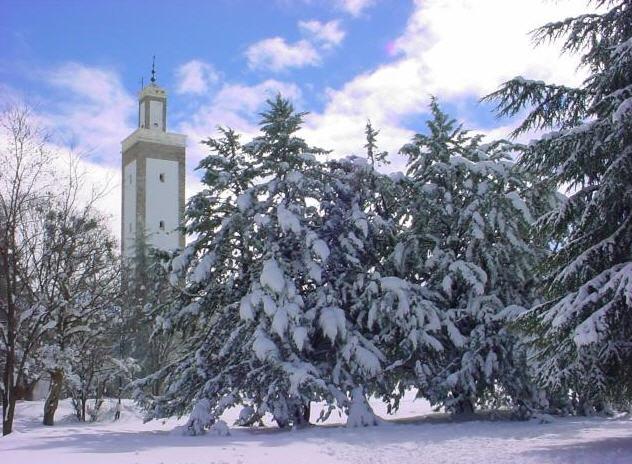 افران تكسوها الثلوج من جديد