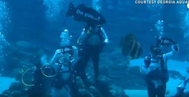 بالفيديو.. أول حفل زفاف في حوض ماء مليء بالأسماك