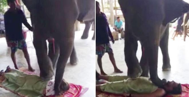 بالفيديو.. فيل يجري جلسة تدليك لعروسين