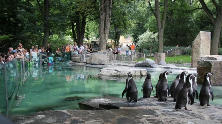 لأول مرة بأكادير.. إنجاز حديقة حيوانات بمواصفات عالمية