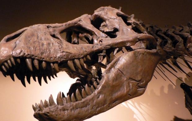 فكيك. اكتشاف عظام وآثار أقدام ديناصورات