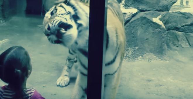 بالفيديو.. أطفال يخاطرون بحياتهم في حديقة للحيوانات