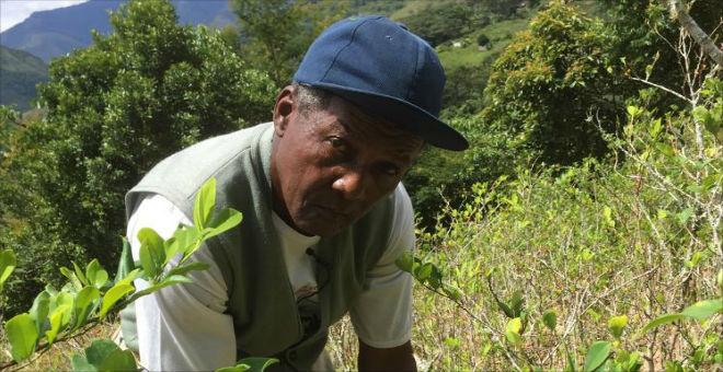 بيع أوراق نبات مخدر الكوكا..مهنة أفقر ملك في العالم