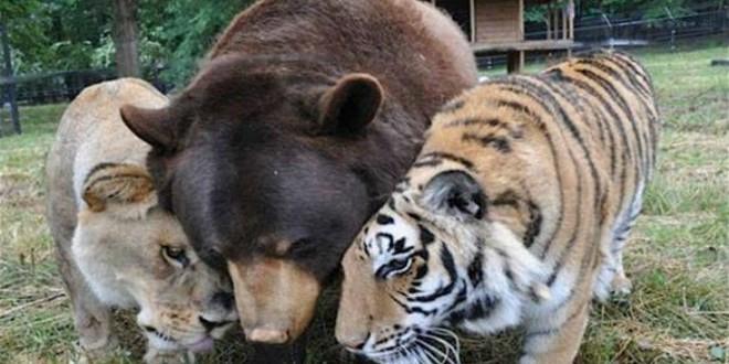 الحيوانات المفترسة