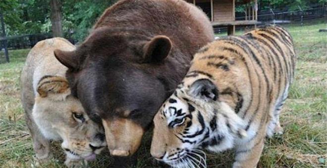 صور لأكثر الحيوانات المفترسة التي تعيش صداقة أسطورية
