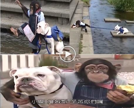 بالفيديو: صداقة غريبة بين قرد وكلب في اليابان