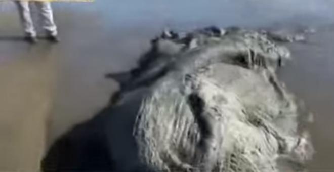 بالفيديو..العثور على كائن بحري غريب بسواحل المكسيك