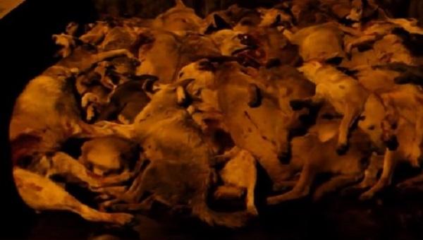 فيديو صادم: إعدام كلاب ضالة بالرصاص الحي بالقصر الكبير