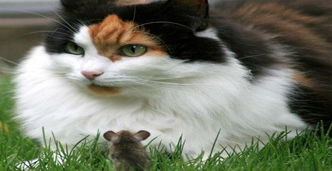 استيراد 500 ألف قطة لمحاربة