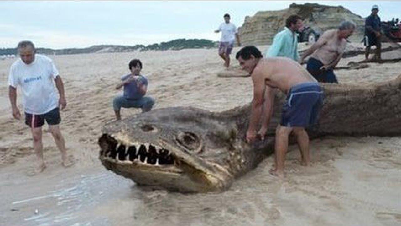 10 أشياء غريبة وجدت في البحر!