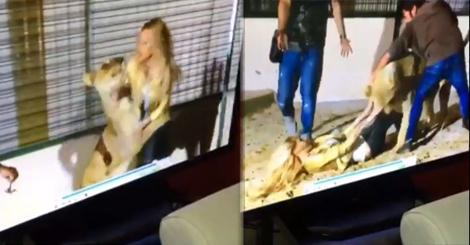 بالفيديو.. فنانة لبنانية شهيرة تصرخ بين أنياب أسد