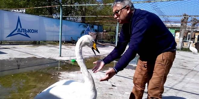 فيديو طريف لبجعة تشتكي أقرانها لمدير الحديقة