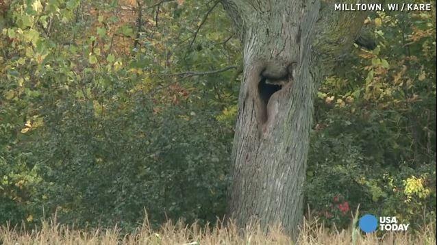 بالفيديو: سمعوا صراخ يأتي من الشجرة.. والنتيجة !