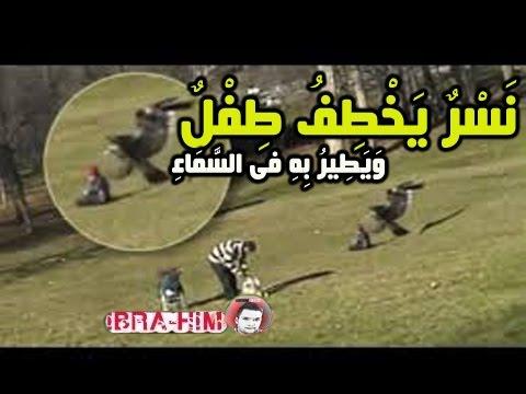 بالفيديو..  نسر يخطف طفل من أمام والدته ويطير به