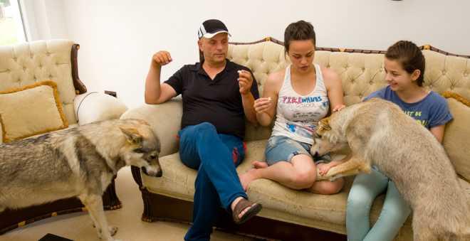 علاقة حب خاصة..عائلة مقدونية تعيش مع قطيع من الذئاب