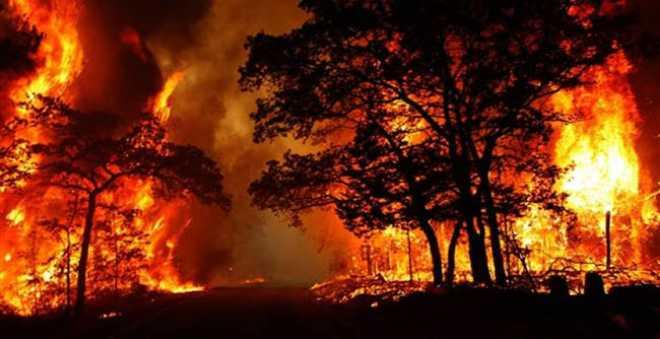 حرائق الغابات تلتهم مساحات مهولة في جهة طنجة خلال العام الجاري