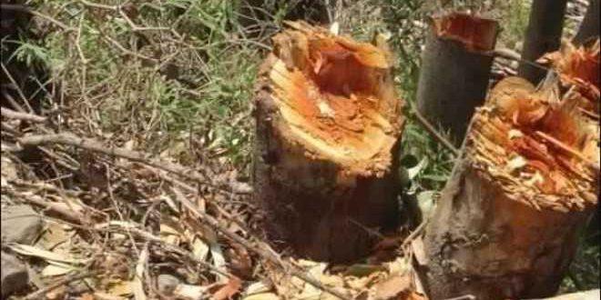ثورة الغابات