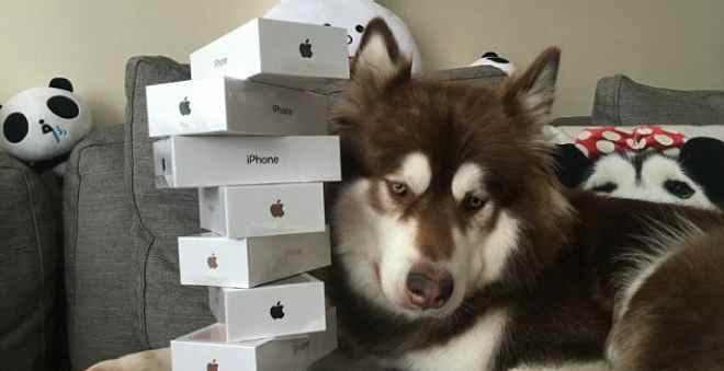 طريف.. ثري يحقق حلم كلبه ويشتري له ثمان هواتف