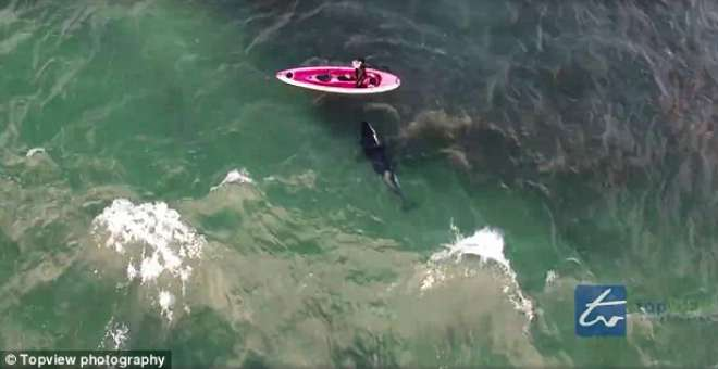 فيديو.. شخص يقفز من على متن قاربه ليسبح مع