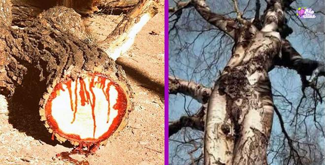 بالفيديو.. أغرب 10 أشجار في العالم !