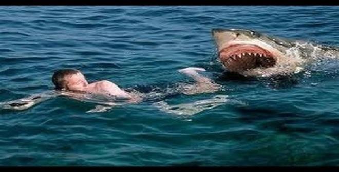 فيديو خطير.. شاب يواجه قرش تحت الماء وينجو بإعجوبة من الموت