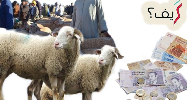 كيف تختار أضحية العيد؟ نصائح هامة قبل شراء الأضحية !