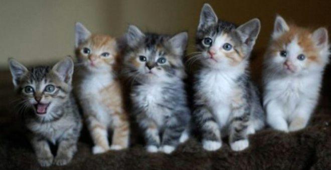 دراسة حديثة تؤكد أن القطط تشكل خطورة على صحة الانسان وقد تهدد حياته