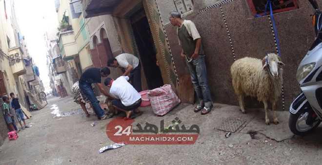 بالصور. هكذا مرت أجواء عيد الأضحى بأحياء البيضاء