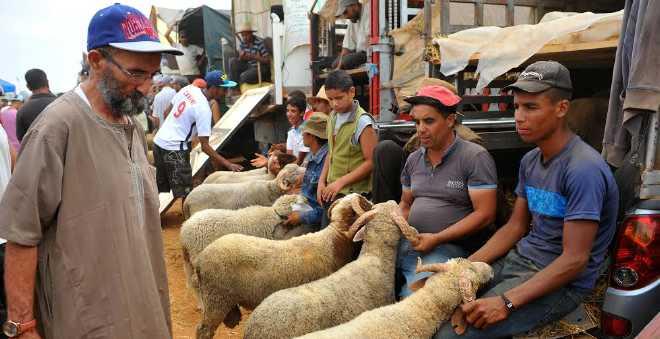 أرقام مثيرة عن استهلاك ونفقات المغاربة في عيد الأضحى!