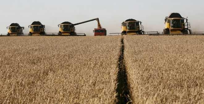 المغرب يشتري 235 ألف طن من القمح الأمريكي اللين
