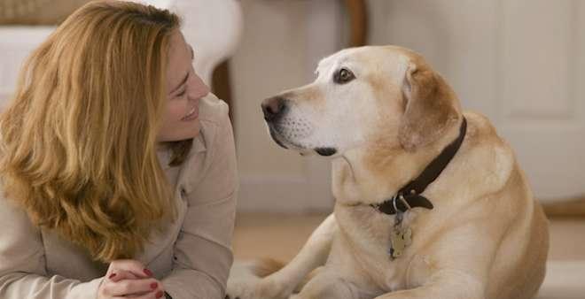 دراسة حديثة تكشفت أن الكلاب تفهم معنى بعض كلمات الإنسان