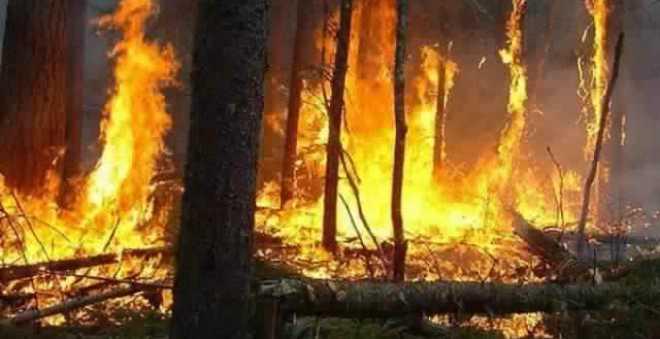 المندوبية السامية تسجل 270 حريقا غابويا على الصعيد الوطني