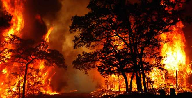 متابعة مشتبهين في حرائق الغابات والجهود متواصلة للحد من استفحال الظاهرة