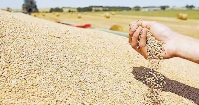 القمح الأمريكي اللين.. المغرب يستورد كمية 235 ألف طن بعد تأخر الأمطار