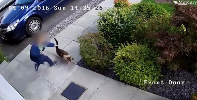 طفل عذّب قطة برميها وركلها بشدة .. لكّنها عاقبته على طريقتها الخاصة!