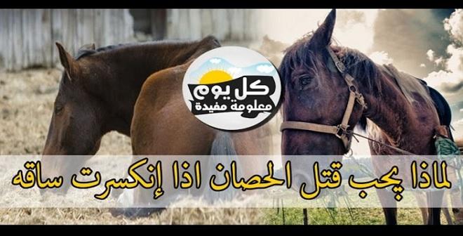 شاهد لماذا يجب قتل الحصان اذا إنكسرت ساقه ؟