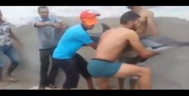 شباب مغاربة ينقذون دلفينا و يعيدونه للبحر في فيديو مؤثر