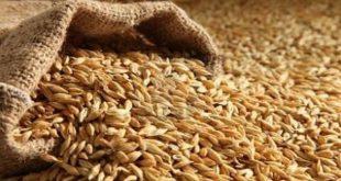 عمال الحبوب