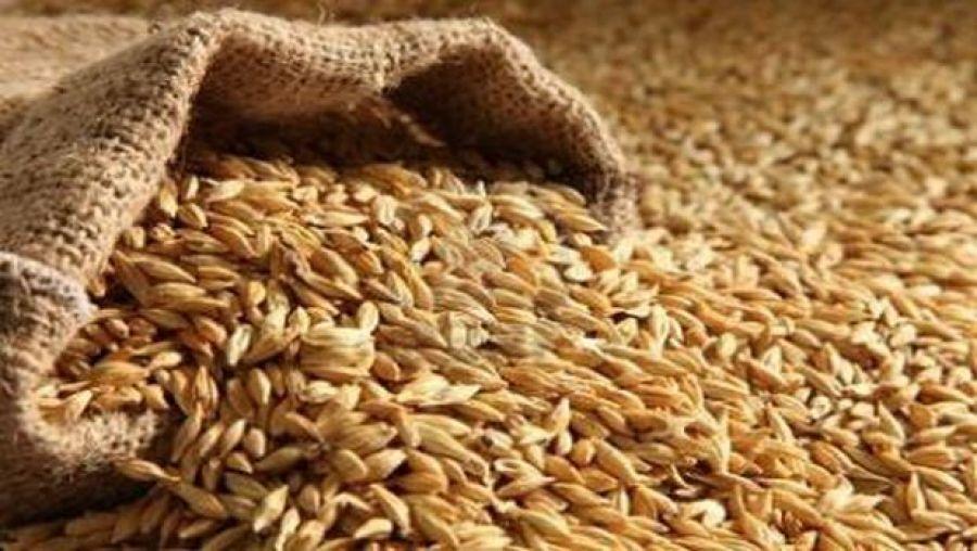 إضراب غضب لعمال الحبوب يهدد بارتفاع أسعار الخبز