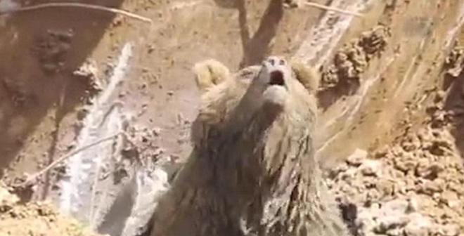 بالفيديو.. مفاجأة لم يتوقعها عمال أتراك أثناء حفرهم لأحد مواقع البناء!