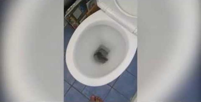 بالفيديو.. رد فعل رجل عثر على فأر المرحاض!