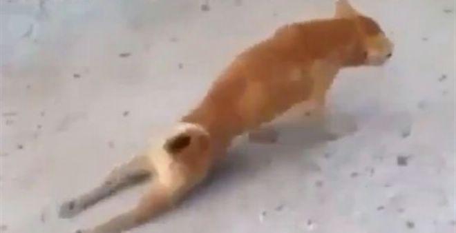 بالفيديو.. لا يصدق.. حتى الكلاب احترفت التسول وتتظاهر بالاعاقة !!