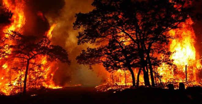 أرقام صادمة حول الخسائر التي تصيب الغابات بسبب الحرائق